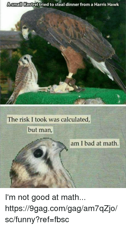 9gag, Bad, and Dank: small Kestrel tried to steal dinner from a Harris Hawk  The risk I took was calculated  but man  am I bad at math I'm not good at math... https://9gag.com/gag/am7qZjo/sc/funny?ref=fbsc