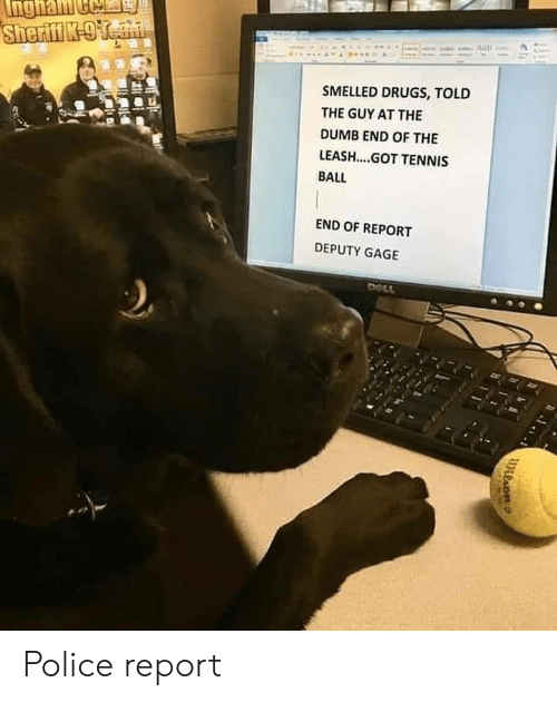 Drugs, Dumb, and Police: SMELLED DRUGS, TOLD  THE GUY AT THE  DUMB END OF THE  LEASH....GOT TENNIS  BALL  END OF REPORT  DEPUTY GAGE Police report