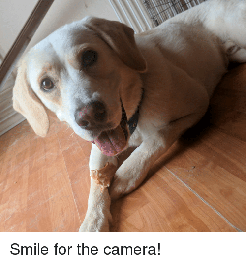 Camera, Good, and Smile: Smile for the camera!