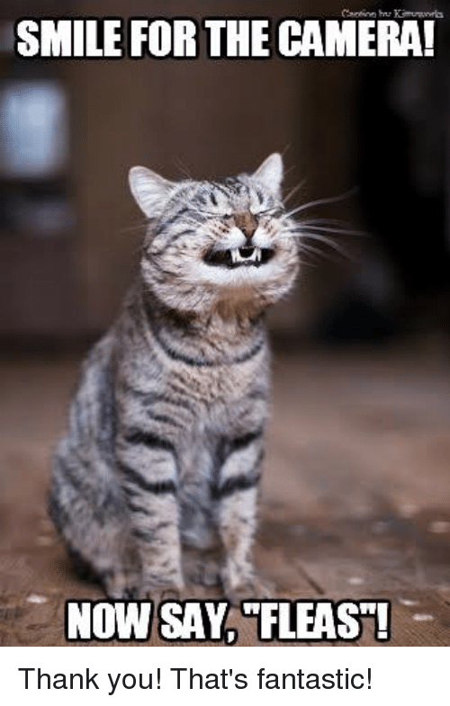 smile for the camera now say fleast thank you thats 21068291 ✅ 25 best memes about smile for the camera smile for the,Camera Meme