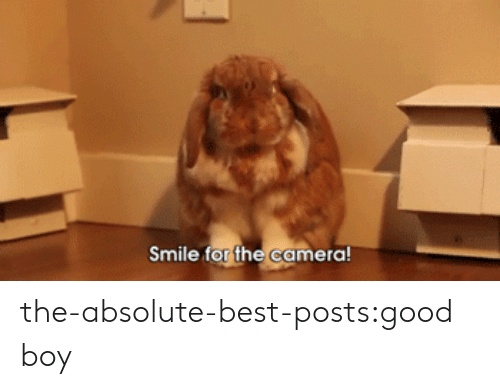 Tumblr, Best, and Blog: Smile for the camera the-absolute-best-posts:good boy