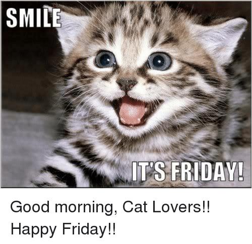 SMILE ITS FRIDAY! Good Morning Cat Lovers!! Happy Friday ...