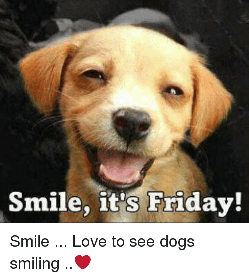 Smile It's Friday! Smile Love to See Dogs Smiling | It's ...