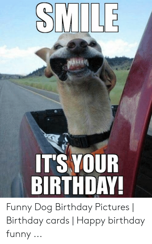SMILE ITS YOUR BIRTHDAY Funny Dog Birthday Pictures