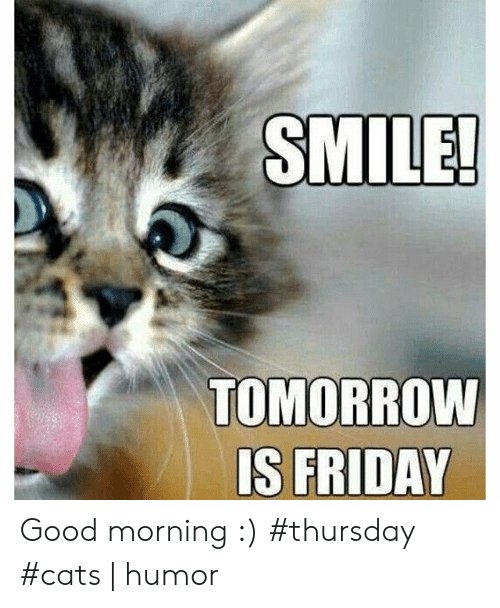 SMILE! TOMORROW IS FRIDAY Good Morning #Thursday #Cats