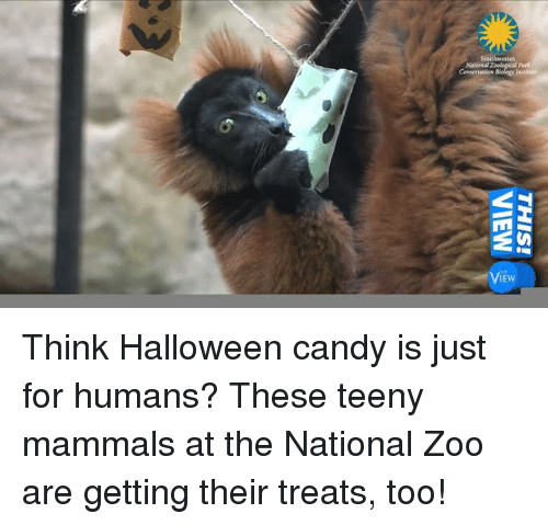 candy halloween and memes smithsonian ew think halloween candy is just for humans