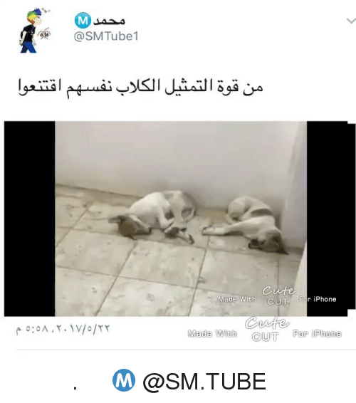 Iphone, Memes, and Tube: SMTube1  Made With  CUT For iPhone  CUT Far il Rhone فجعهم . تابع حساب محمد Ⓜ️ @SM.TUBE