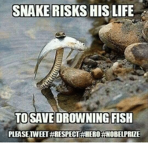 Memes, Fish, and Snake: SNAKE RISKS HIS LIFE  TO SAVE DROWNING FISH  PLEASE TWEET #RESPEC  EROHNOBELPRIZ