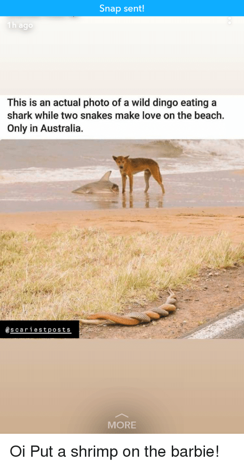 Barbie, Funny, and Love: Snap sent  This is an actual photo of a wild dingo eating a  shark while two snakes make love on the beach.  Only in Australia.  @scariestposts  MORE