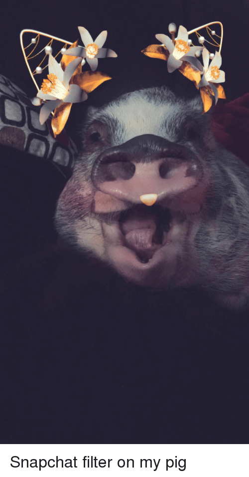 Filter snapchat pig Here's the