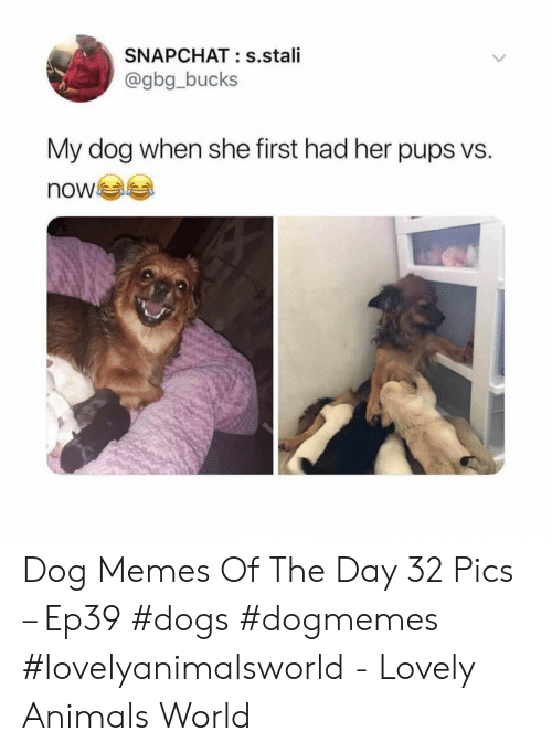 Animals, Dogs, and Memes: SNAPCHAT: s.stali  @gbg_bucks  My dog when she first had her pups vs.  now Dog Memes Of The Day 32 Pics – Ep39 #dogs #dogmemes #lovelyanimalsworld - Lovely Animals World