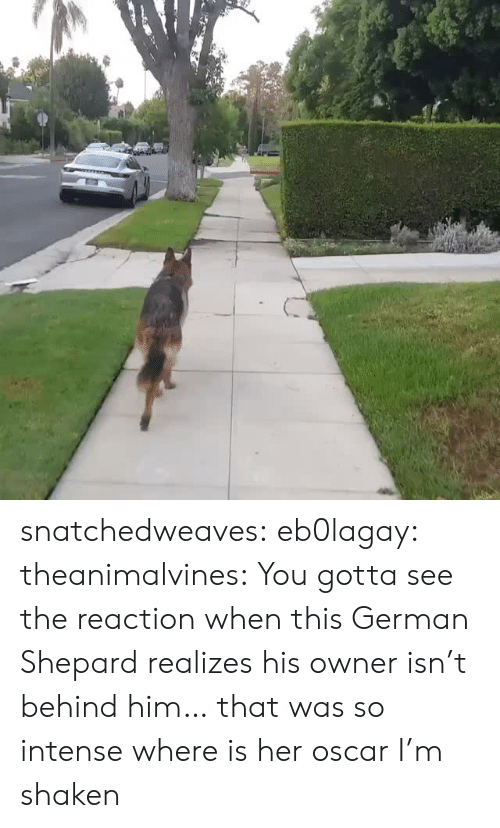 Target, Tumblr, and Blog: snatchedweaves: eb0lagay:  theanimalvines: You gotta see the reaction when this German Shepard realizes his owner isn't behind him… that was so intense  where is her oscar I'm shaken