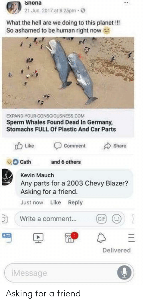 Gif, Chevy, and Germany: snona  21 Jun. 2017 at 8:25pm  What the hell are we doing to this planet!!  So ashamed to be human right now  EXPAND-YOUR-CONSCIOUSNESS.COM  Sperm Whales Found Dead In Germany,  Stomachs FULL Of Plastic And Car Parts  Like  Share  Comment  and 6 others  Cath  Kevin Mauch  Any parts for a 2003 Chevy Blazer?  Asking for a friend.  Just now Like Reply  Write a comment...  GIF  Delivered  iMessage  30 Asking for a friend