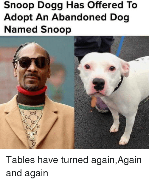 Snoop, Snoop Dogg, and Dog: Snoop Dogg Has Offered To  Adopt An Abandoned Dog  Named Snoop Tables have turned again,Again and again