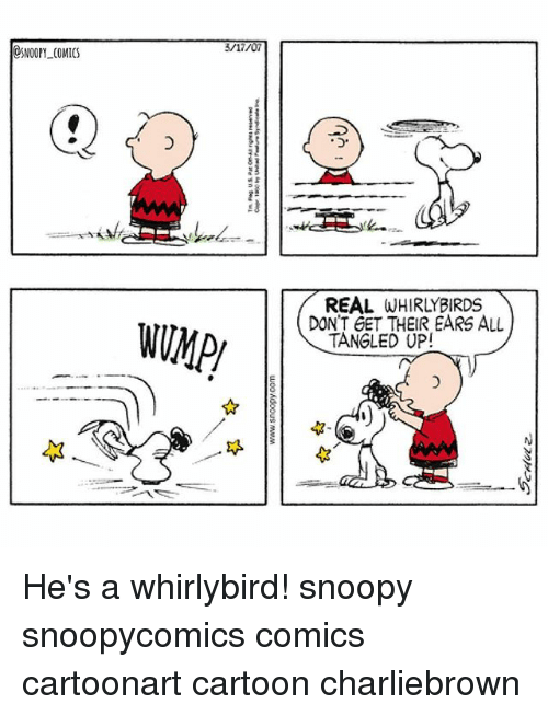 Memes, Cartoon, and Snoopy: SNOOPY COMICS  REAL  DON'T GET THEIR EARS ALL  TANGLED UP! He's a whirlybird! snoopy snoopycomics comics cartoonart cartoon charliebrown
