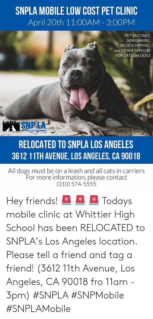 Cats, Dogs, and Friends: SNPLA MOBILE LOW COST PET CLINIC  April 20th 11:00AM - 3:00PNM  PET VACCINES  DEWORMING  MICROCHIPPING,  and OTHER SERVICES  FOR CATS and DOGS  SNP LA  RELOCATED TO SNPLA LOS ANGELES  3612 11TH AVENUE, LOS ANGELES, CA 90018  All dogs must be on a leash and all cats in carriers  For more information, please contact  (310) 574-5555 Hey friends! 🚨 🚨 🚨 Todays mobile clinic at Whittier High School has been RELOCATED to SNPLA's Los Angeles location. Please tell a friend and tag a friend! (3612 11th Avenue, Los Angeles, CA 90018 fro 11am - 3pm) #SNPLA #SNPMobile #SNPLAMobile