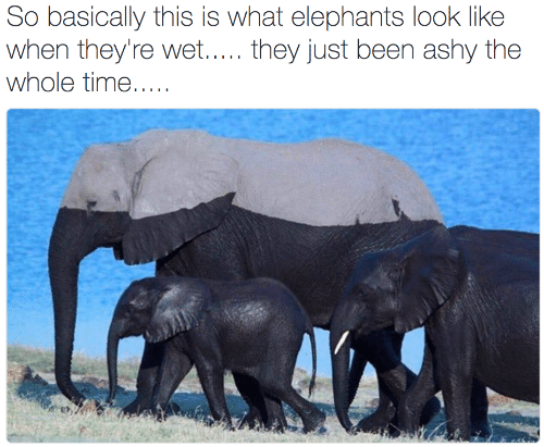 Time, Elephants, and Been: So basically this is what elephants look like  when they're wet..... they just been ashy the  whole time.....