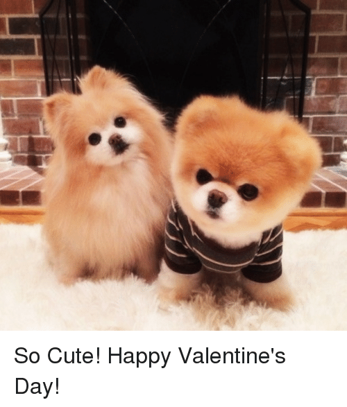 Cute, Valentine's Day, and Happy