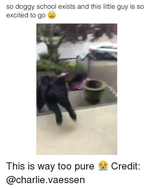Charlie, Memes, and School: so doggy school exists and this little guy is so  excited to go This is way too pure 😭 Credit: @charlie.vaessen