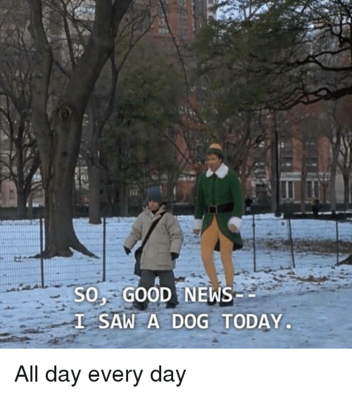 News, Saw, and Good: SO GOOD NEWS  L SAW A DOG TODAY <p>All day every day</p>