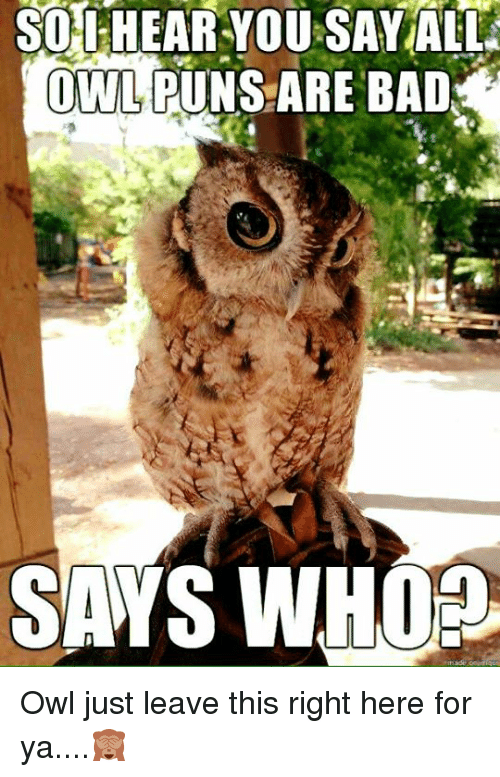 So Hearyou Sayall Owl Puns Are Bad Saws Whop Owl Just Leave This