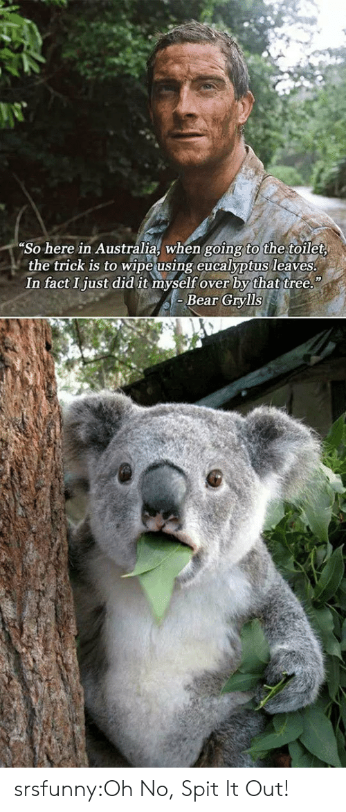 Tumblr, Australia, and Bear: So here in Australia, when going to the toilet  the trick is to wipe using eucalyptus leaves  In fact Ijust did it myself over by that tree.  Bear Grylls srsfunny:Oh No, Spit It Out!
