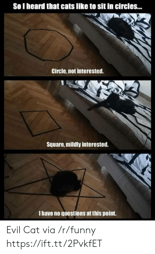 Cats, Funny, and Square: So I heard that cats like to sit in circles...  Circle, not interested.  Square, mildly interested.  I have no questions at this point. Evil Cat via /r/funny https://ift.tt/2PvkfET