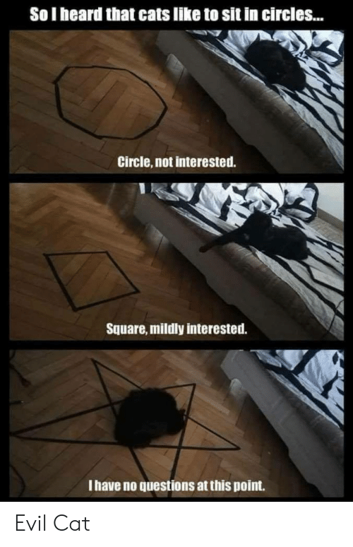 Cats, Square, and Circles: So I heard that cats like to sit in circles...  Circle, not interested.  Square, mildly interested.  I have no questions at this point. Evil Cat
