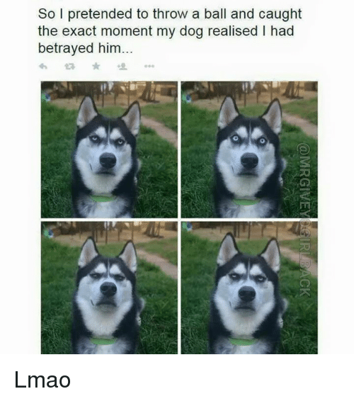 Lmao, Dank Memes, and Dog: So I pretended to throw a ball and caught  the exact moment my dog realised I had  betrayed him Lmao