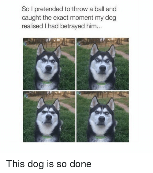 Girl Memes, Dog, and Him: So I pretended to throw a ball and  caught the exact moment my dog  realised I had betrayed him... This dog is so done