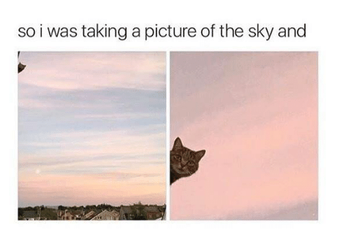 Memes, A Picture, and 🤖: so i was taking a picture of the sky and