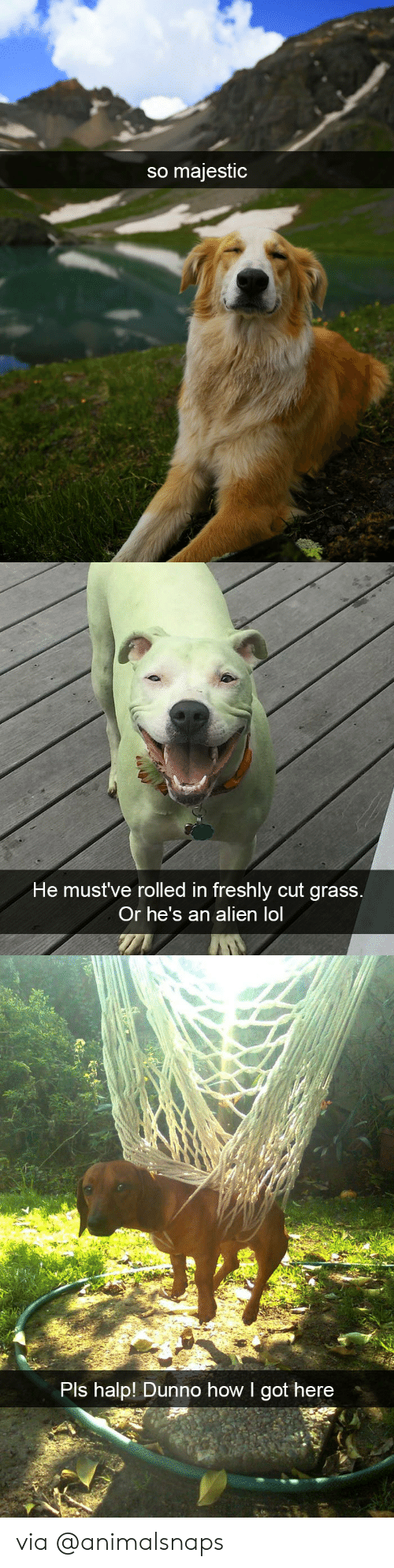Lol, Target, and Tumblr: so majestic   ni  He mustve rolled in freshly cut grass  Or he's an alien lol   Pls halp! Dunno how I got here via @animalsnaps
