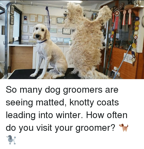 So Many Dog Groomers Are Seeing Matted Knotty Coats Leading Into