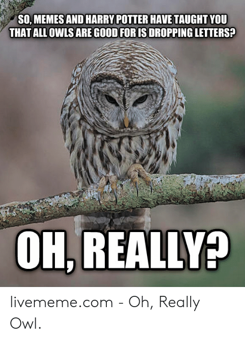 So Memes And Harry Potter Have Taught You That All Owls Are Good