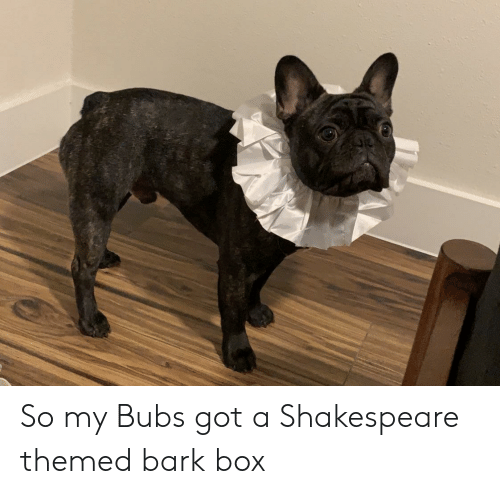 Shakespeare, Got, and Box: So my Bubs got a Shakespeare themed bark box