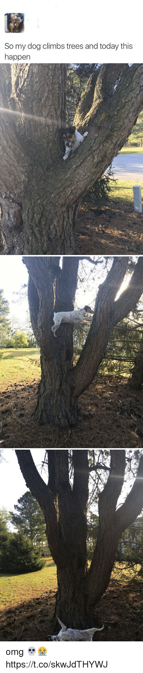 Memes, Omg, and Today: So my dog climbs trees and today this  happen omg 💀😭 https://t.co/skwJdTHYWJ