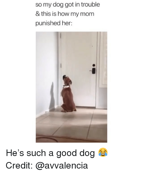 Memes, Good, and Mom: so my dog got in trouble  & this is how my mom  punished her: He's such a good dog 😂 Credit: @avvalencia