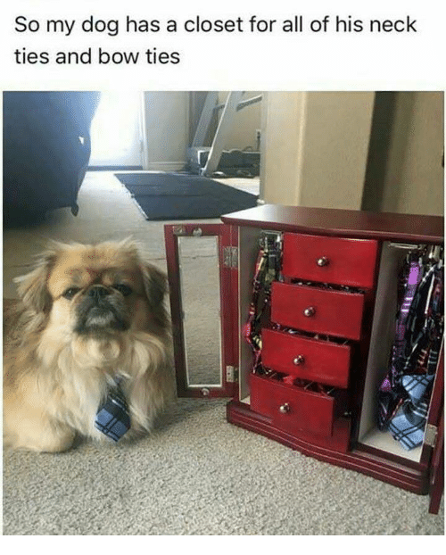 Dog, Bow, And All: So My Dog Has A Closet For All Of