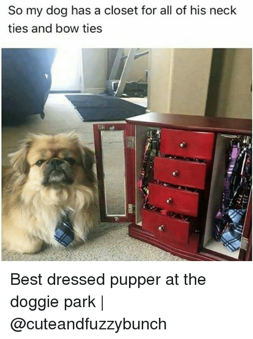 Memes, Best, And 🤖: So My Dog Has A Closet For All Of