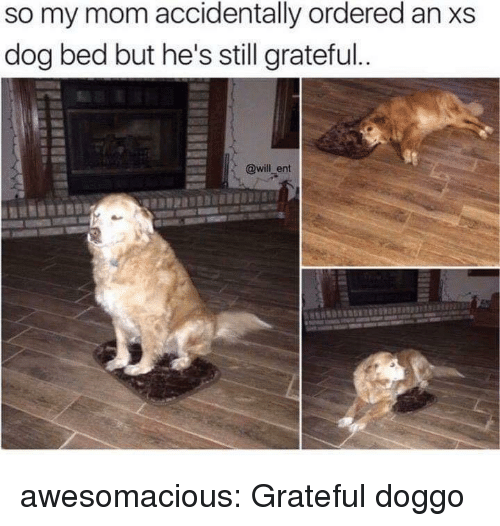 Tumblr, Blog, and Http: so my mom accidentally ordered an xs  dog bed but he's still grateful  @will_ent awesomacious:  Grateful doggo