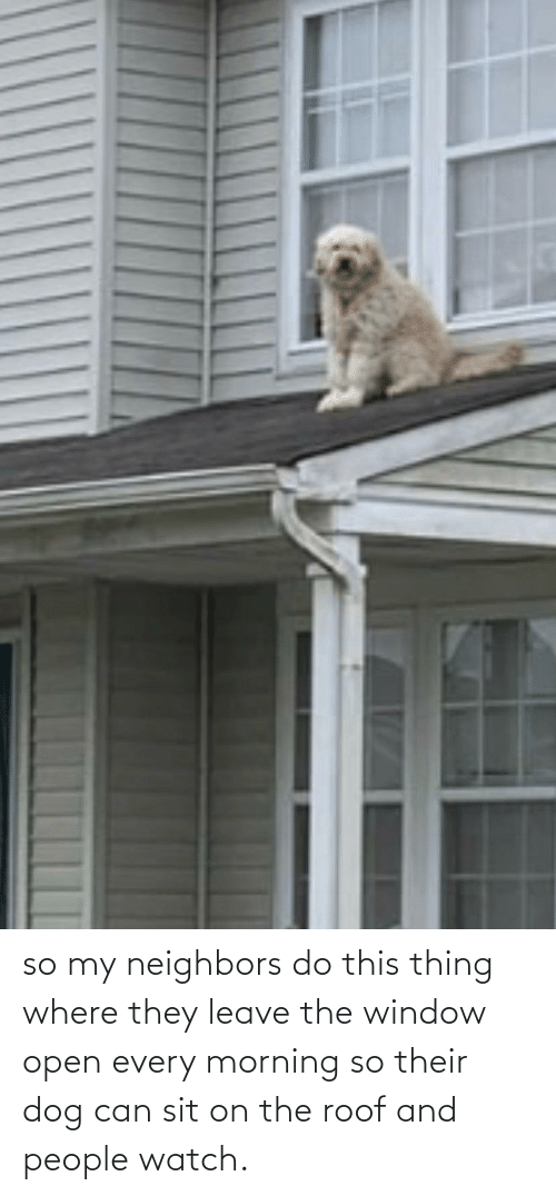 Neighbors, Watch, and Dog: so my neighbors do this thing where they leave the window open every morning so their dog can sit on the roof and people watch.