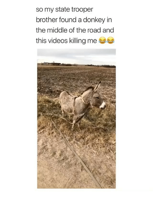 Donkey, Memes, and Videos: so my state trooper  brother found a donkey in  the middle of the road and  this videos killing me