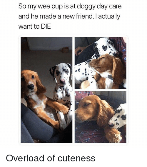 25 best memes about cuteness cuteness memes for Best doggy day care