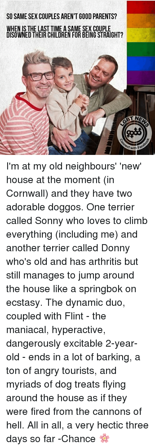 Children, Jump Around, and Memes: SO SAME SEX COUPLES AREN'T GOOD PARENTS?  WHEN IS THE LAST TIME A SAME SEX COUPLE  DISOWNED THEIR CHILDREN FOR BEING STRAIGHT?  with Face I'm at my old neighbours' 'new' house at the moment (in Cornwall) and they have two adorable doggos. One terrier called Sonny who loves to climb everything (including me) and another terrier called Donny who's old and has arthritis but still manages to jump around the house like a springbok on ecstasy. The dynamic duo, coupled with Flint - the maniacal, hyperactive, dangerously excitable 2-year-old - ends in a lot of barking, a ton of angry tourists, and myriads of dog treats flying around the house as if they were fired from the cannons of hell. All in all, a very hectic three days so far -Chance 🌸
