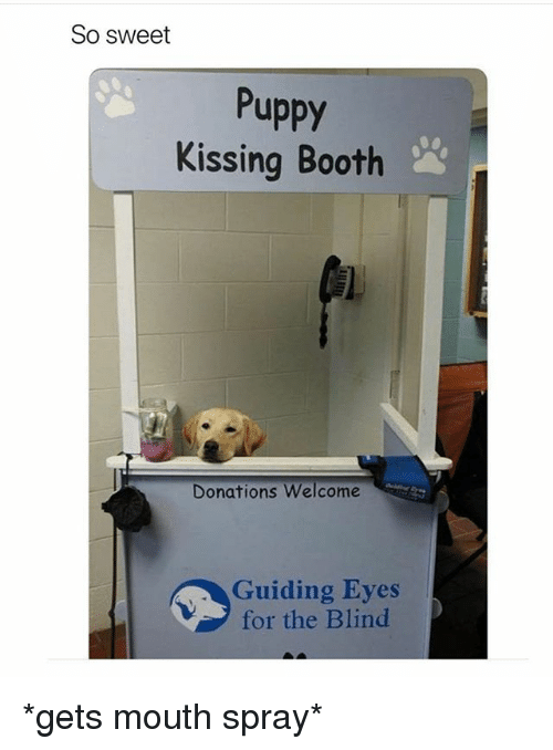 Funny, Puppy, and Kissing: So sweet  Puppy  Kissing Booth  a)  Donations Welcome  Guiding Eyes  for the Blind *gets mouth spray*