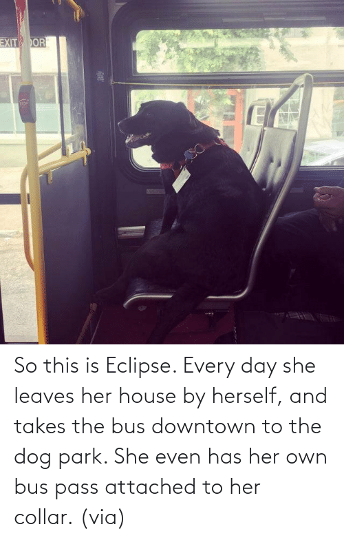 Aww, Reddit, and Target: So this is Eclipse. Every day she leaves her house by herself, and takes the bus downtown to the dog park. She even has her own bus pass attached to her collar.(via)