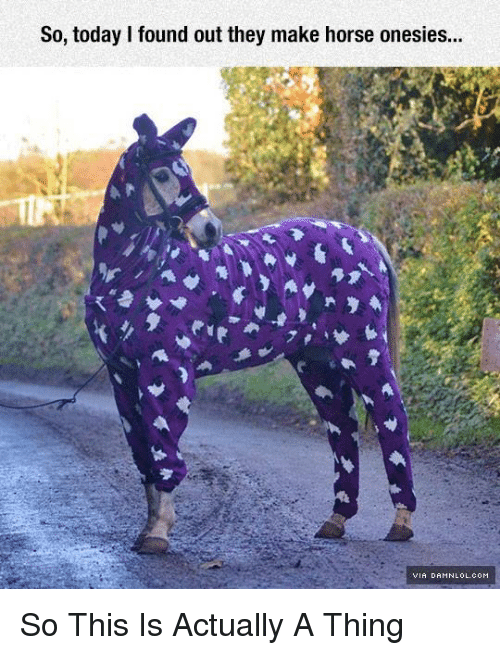 Horses, Memes, and Horse: So, today found out they make horse onesies... So This Is Actually A Thing