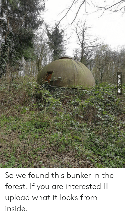So We Found This Bunker in the Forest if You Are Interested