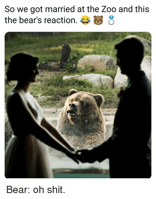 Memes, Shit, and Bear: So we got married at the Zoo and this  the bear's reaction. Bear: oh shit.