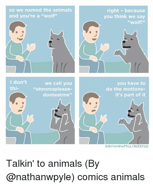 "Animals, Memes, and Buzzfeed: so we named the animals  and you're a ""wolf""  right- because  you think we say  ""wolf!""  I don't  thi-  we call you  ""ohnonoplease-  donteatme""  you have to  do the motions-  it's part of it  NATHANWPYLE/ BUZZFEED Talkin' to animals (By @nathanwpyle) comics animals"